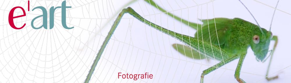 e_art_Foto
